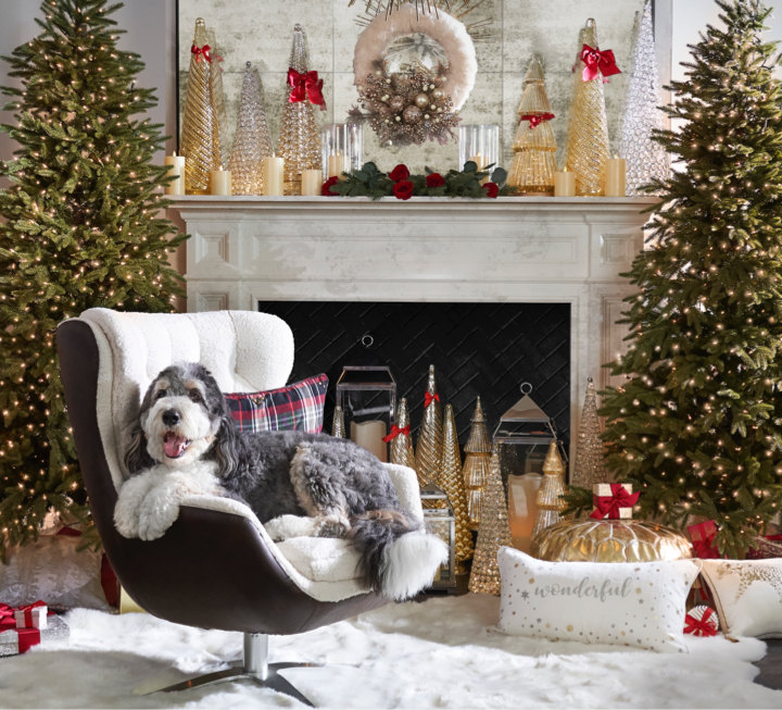 Image of a room decorated for the holidays with Ernie the dog looking cute and relaxing in a chair.